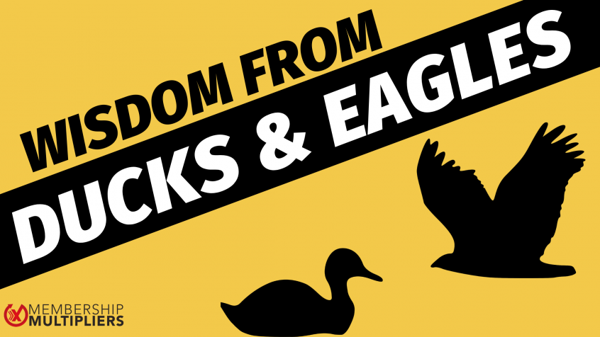 Wisdom From Ducks And Eagles